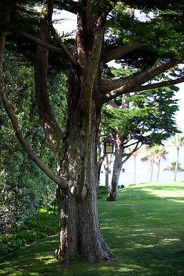 EWLOC Trees